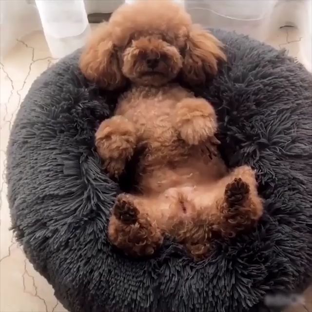 Cama confortável para acalmar cães / gatos (compre 1 e ganhe 10% OFF no cupom: RCDZ10)   – Angucken