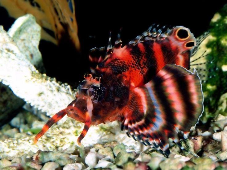 Exotic fish underwater pictures -