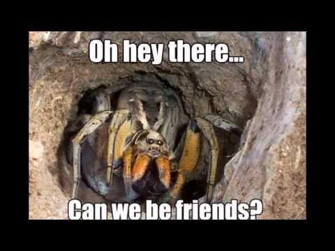 Spider Memes - YouTube