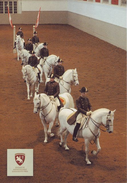 These horses are the famous Lipizzaner stallions from the Spanish Riding School in Vienna Austria. On the back of this card, where the message would normally be written, there is an ad for a performance at the Sportpaleis Antwerpen in Antwerp, Belgium.