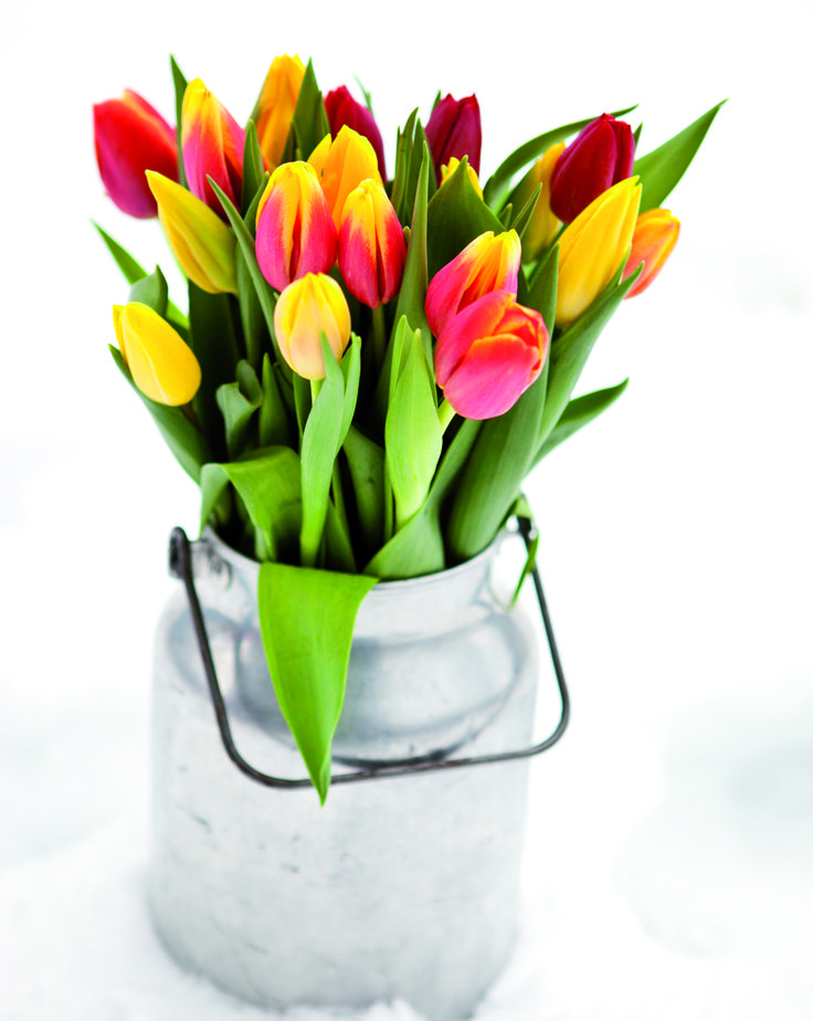 Pynt til påske med tulipaner: https://www.mestergronn.no/pynt-til-paaske/cms/194