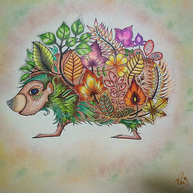 Partilhado Com Instagrab Johanna BasfordSketchAdult ColoringColoring BooksPrismacolorHedgehogsStencilInstagramEnchanted Forest