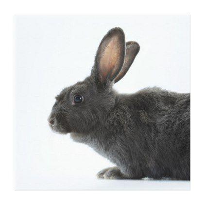 A Rare Silver Fox Heirloom Rabbit Canvas Print - portrait gifts cyo diy personalize custom