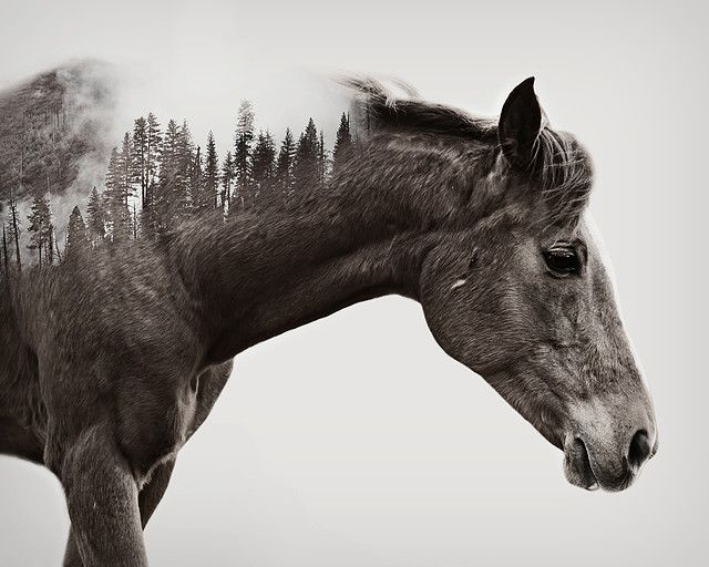 A. Meyer Photography | DOUBLE EXPOSURES | Double Exposures