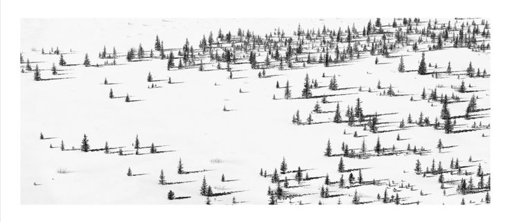 Richard Johnson, Ice Fields Parkway series - taken in Alberta, the long shadows in this photo remind me of Edward Steichen's Matchsticks. very calm, but the sharp trees make for a nice contrast to that.