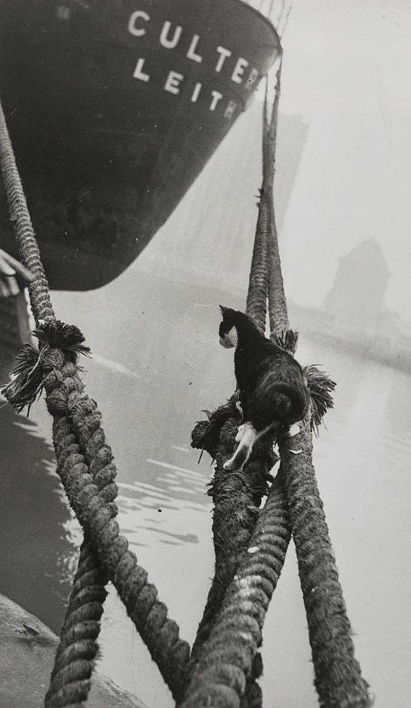 Cats of London 1951. The blitz had made many cats homeless, and these stray cats lived wild on the bombsites, surviving by scavenging. Cat flaps were unknown, so even cats with homes spent musch of their time outdoors and would be put outside at night time