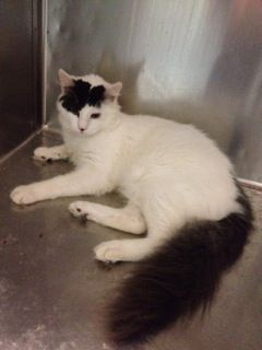 URGENT!! URGENT CATS OF MIAMI ** Courtesy Post: Urgent FeLV+ **SHARE** Please share Luke, it is very urgent. Luke has been boarding at a local vet's office for a very long time, months, and they do not want him there anymore. Luke is just about 9 months old, fully vetted, but Luke has Leukemia, so he needs to be an only cat or in a home with other FeLV+ cats. https://www.facebook.com/photo.php?fbid=797579253588996&set=a.254695454544048.82984.231008256912768&type=1&relevant_count=1