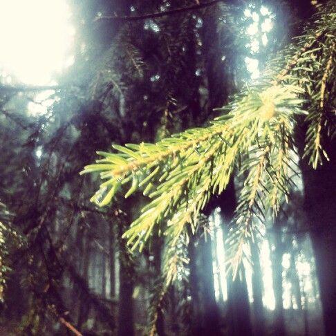 Little branch