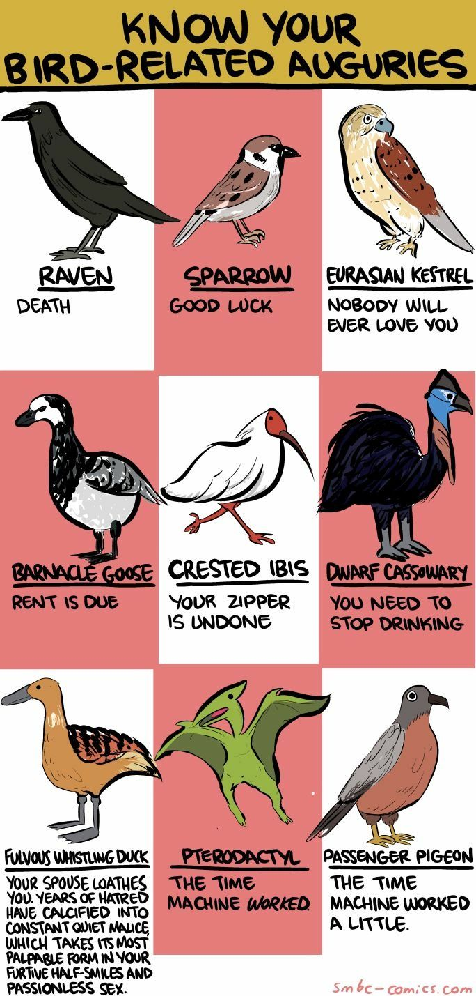 406 best writing miscellaneous quotes images on pinterest damn that dwarf cassowary pooptronica