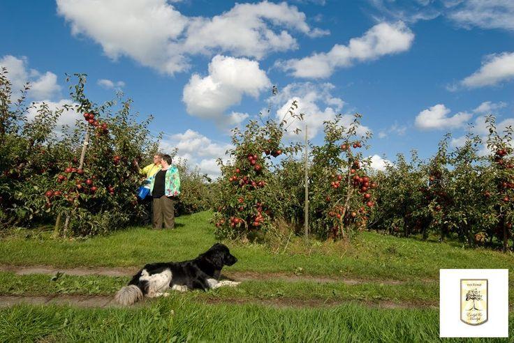 Een mooie plaat uit het verleden....samen in de boomgaard aan het werk en onze vriend houdt alles in de gaten :-)