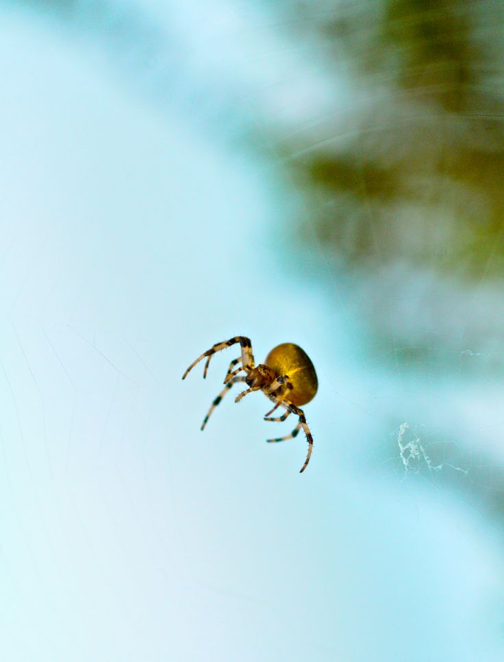 Photographer Pernille Westh | Spider · Get my 7 FREE basic photography tips - you need to know! http://pw5383.wixsite.com/free-photo-tips