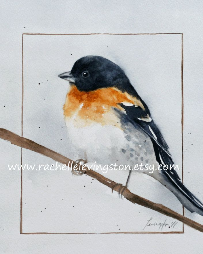 572 best birds images on Pinterest