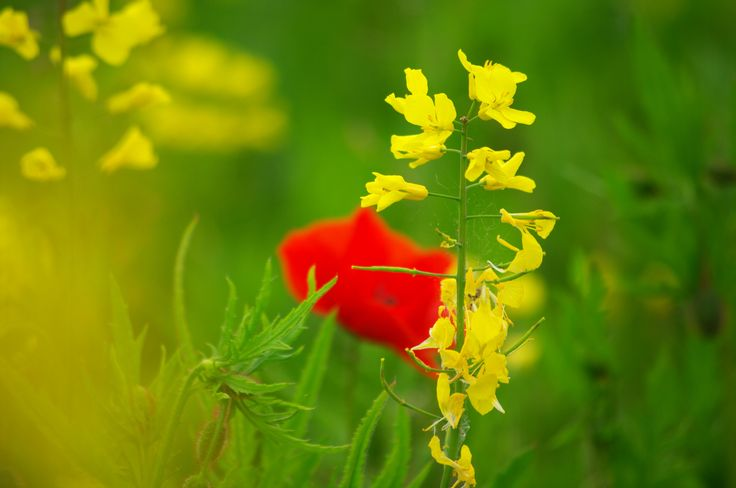 yellow and red flower!!