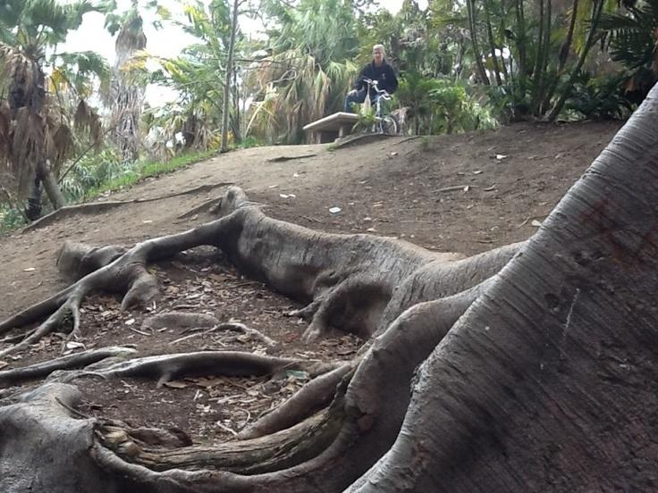 Balboa Park 2: Balboa Parks,  Varanus Komodoensi,  Komodo Lizards, Komodo Dragon,  Giant Lizards,  Dragon Lizards, Of San Diego Mi