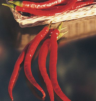 """Joe's Long Cayenne Pepper Long, slender cayenne with medium heat.Bright red fruits are excellent for homemade hot sauce and dry well for ristras and delicious, dried hot pepper flakes. The 8-10"""" long, thin-fleshed fruits taper to a skinny point."""