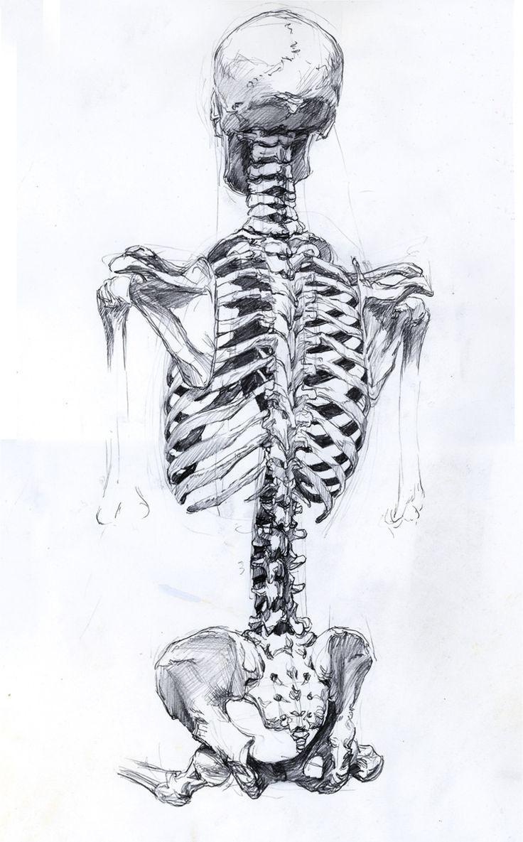 Great human skeleton drawing... | 107 Academic Ecorche Studies ...