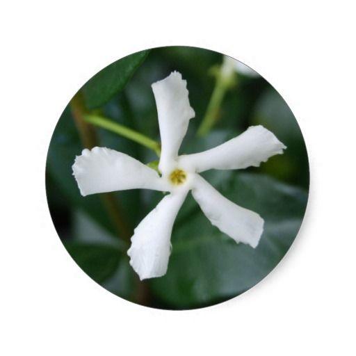 Star Jasmine Sticker