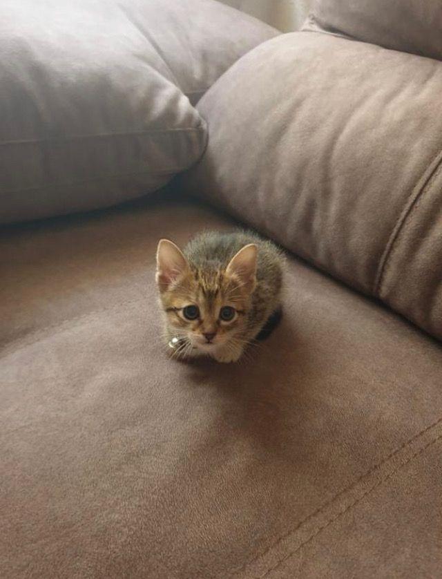 Allerpet Cat Dander Remover 12 Oz Bottle Chewy Com Cat Dander Kittens Funny Cats