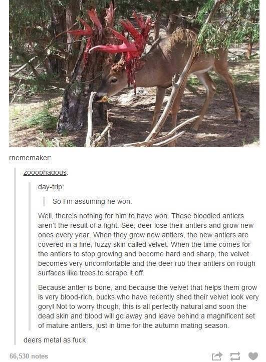 The 1st time I saw a deer doing this I was a little kid and I thought he was dying lol