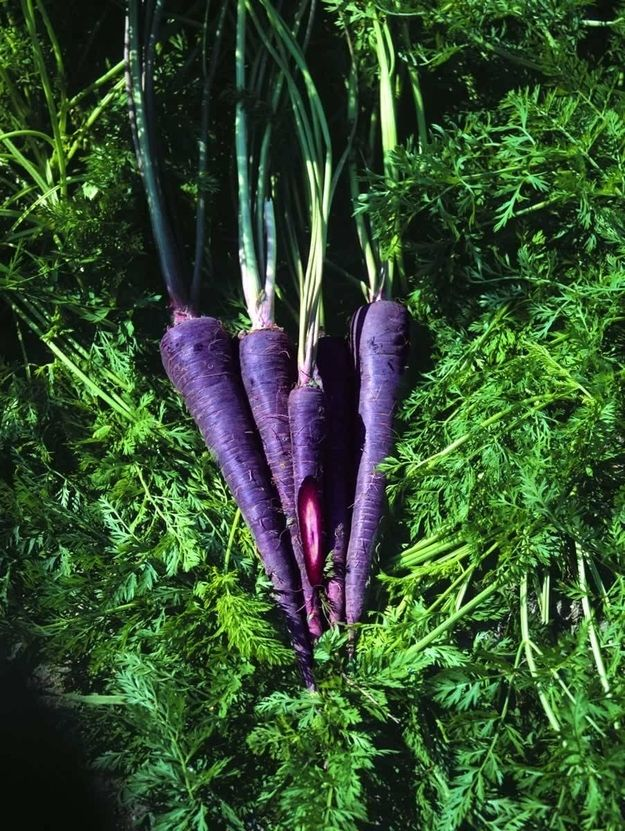Community Post: Purple Versions Of Your Favorite Non-Purple Vegetables