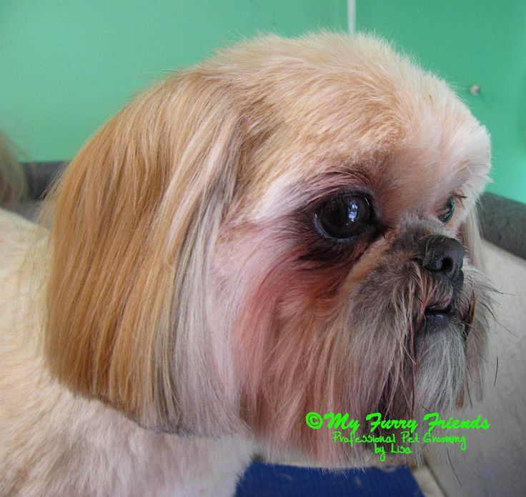 121 best dog grooming images on pinterest dog grooming dog pet grooming the good the bad the furry scissoring a shih solutioingenieria Images