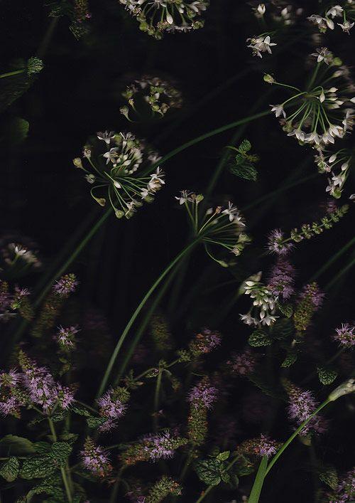 """""""Flatbed Roam"""", photos by Simon Nunn (using a scanner)."""
