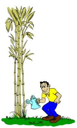 A Lesson You Must Learn From The Chinese Bamboo Tree