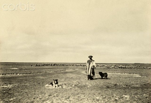 Dogs accompany a shepherd and flock in the steppe region of Hortobagy