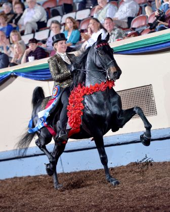 Grand National & World Championship Morgan Horse Show coming to OKC   KFOR.com....me and my grandparents used to always go to this show