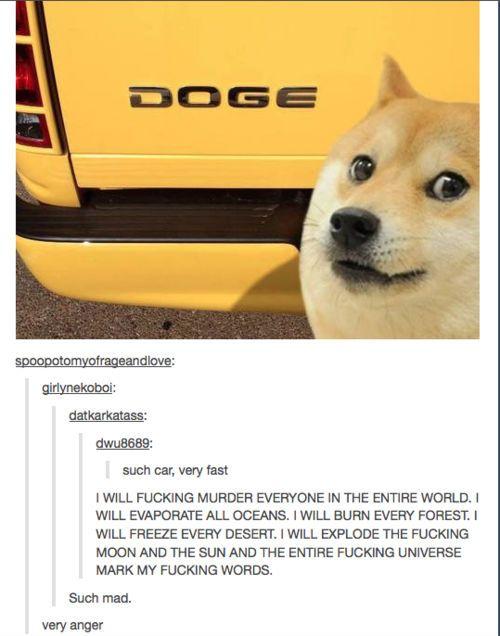 Best of Doge memes