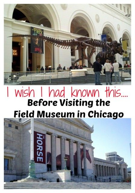 I wish I had known this before visiting the Field Museum in Chicago. Handy tips to know before you go! Chicago travle tips.
