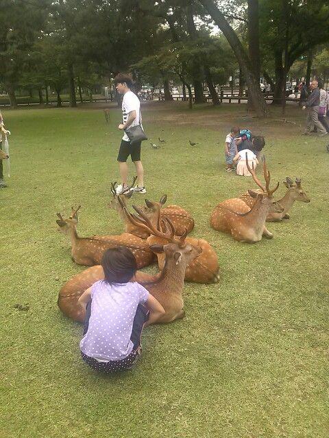 #nara #narapark #deer #奈良 #奈良公園 #鹿 さん グダー