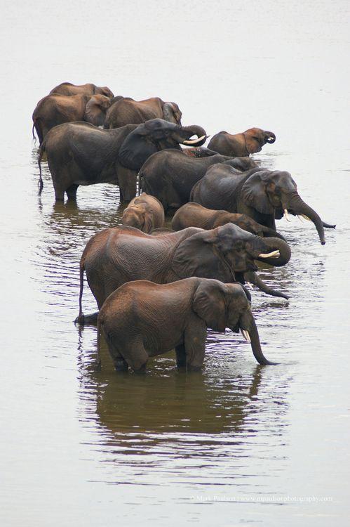 Elephants                                                                                                                                                      More