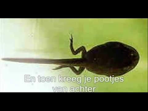 Dag lieve kikker.wmv - YouTube