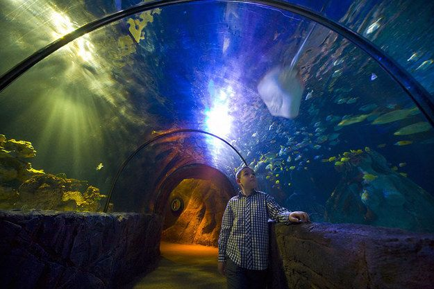 An Entire House Built Around An #Aquarium! Underwater tunnel in the #SeaLife Centre at Chessington World of #Adventures.