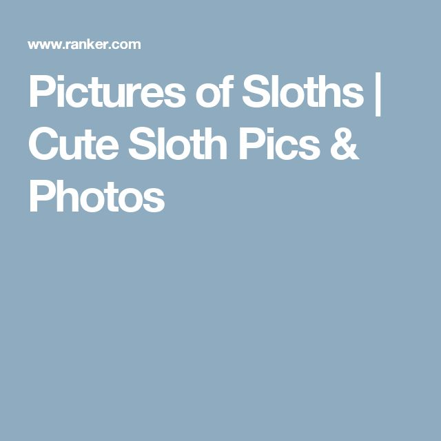 Pictures of Sloths | Cute Sloth Pics & Photos