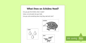 What Does An Echidna Need? Activity Sheet