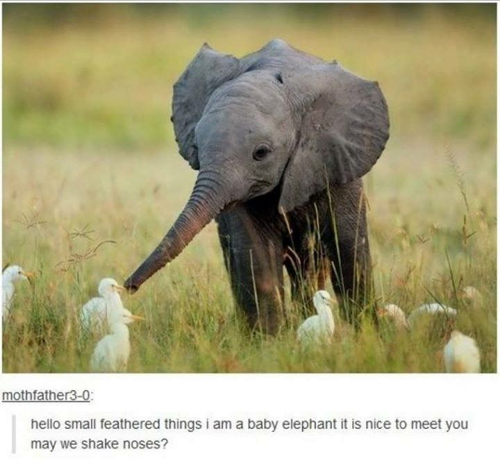 Hello small feathered things. I am a baby elephant. It is nice to meet you. May we shake noses? // I LOVE THIS