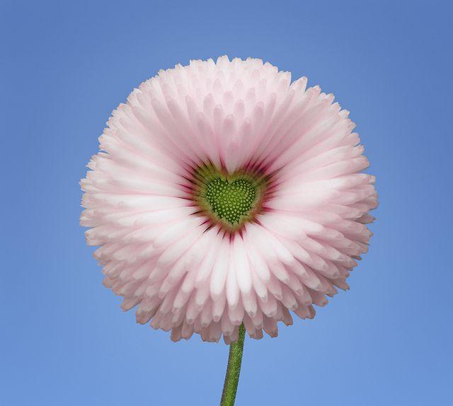 Livraison bouquets fleurs par internet 58 fleurs bouquet for Livraison de fleurs par internet