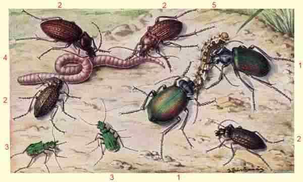 De regenworm is een belangrijke voedselbron voor veel terrariumdieren, vogels, insekten en kan gebruikt  worden als aas bij het vangen van vis. Maar de belangrijkste  is de productie van tuinaarde: de worm eet bladeren en tuinafval en verteert het tot zuivere tuinaarde Verwar de regenworm niet met de mestpier: Deze worm is  als geen ander geschikt om compost te produceren,  De regenworm is uitstekend voor de bodem maar heeft in composthopen niets te zoeken.