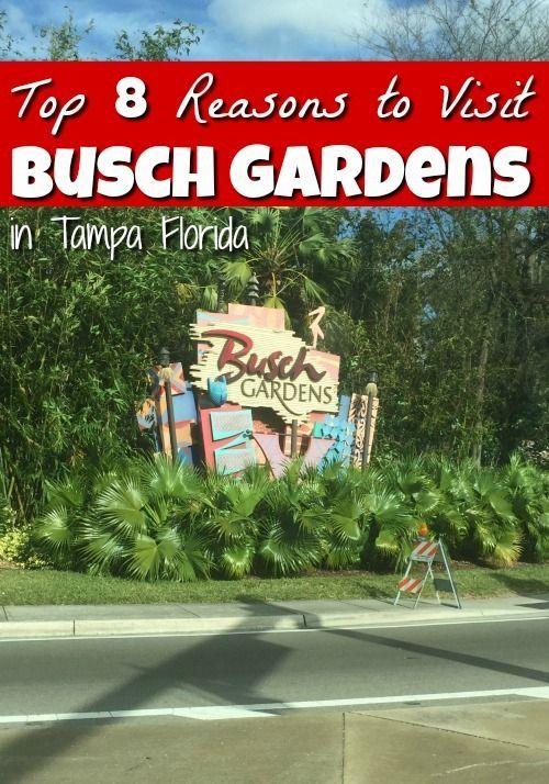 Best 25 busch gardens tampa ideas on pinterest busch - Directions to busch gardens tampa florida ...