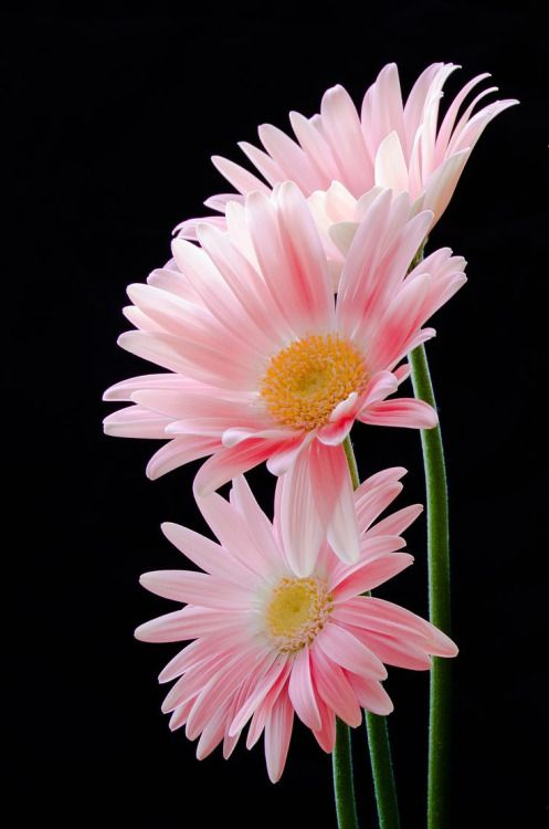 daisies-in-thedark: feistyangel3: lovethesea68: Flowers for the beautiful daisies-in-thedark *smile* Thank you sweetie! ~dd