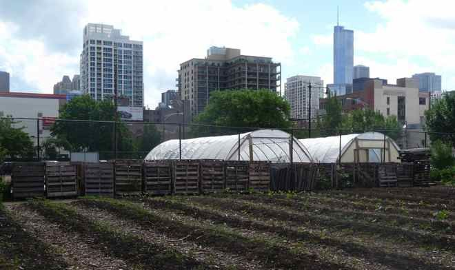 10 Urban Agriculture Projects in Chicago to Explore