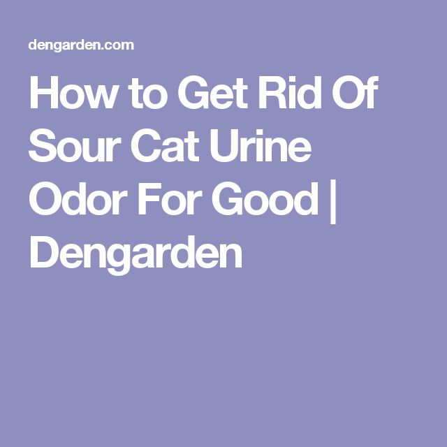 How to Get Rid Of Sour Cat Urine Odor For Good | Dengarden
