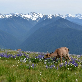 1000 Images About Points Of Interest Washington State On