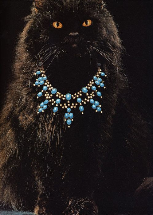 kitty princess - love the necklace!Paris Vogue, Beautiful Cats, Black Cats, Bvlgari Cat, Pretty Cats, Necklaces, Fancy Kitty, Bling Bling, Animal