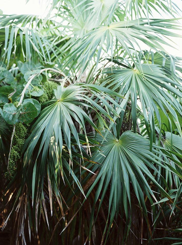 Foliage in Tulum. Greenery.
