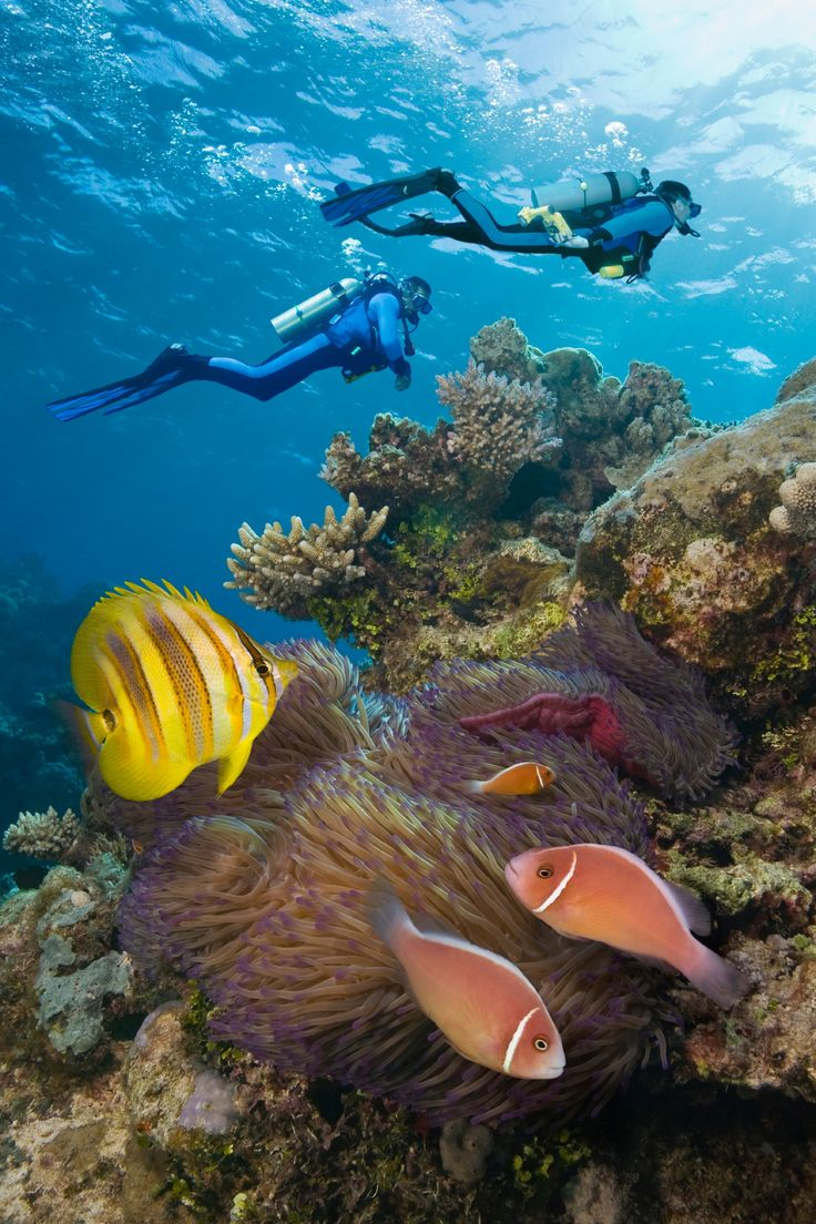 Go on an underwater adventure. ©Jeff Hunter/Getty Images.