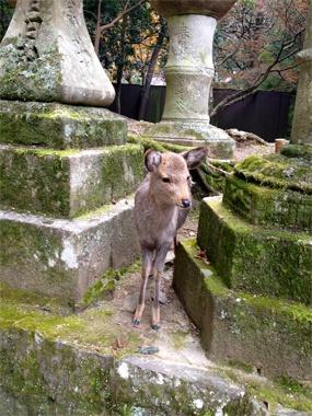 奈良公園内にある春日大社に行く途中、天然記念物に指定されている「奈良のシカ」がお出迎え。お参りする前に癒されます。(齋藤)【Numero TOKYO編集長 田中杏子】 http://lexus.jp/cp/10editors/contents/numero/index.html ※掲載写真の権利及び管理責任は各編集部にあります。LEXUS pinterestに投稿されたコメントは、LEXUSの基準により取り下げる場合があります。