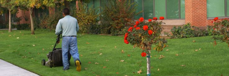 """""""Quality Lawn Turf"""" Supplier of finest lawn turf in South Dublin and surrounding areas"""